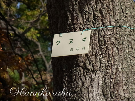 091208kunugi2_2